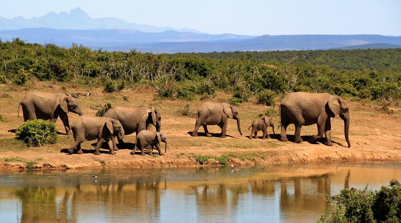elephant-279505_1280